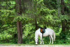 Horse in the forest Stock Photo