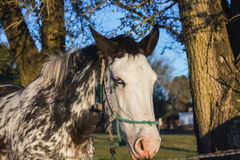 Horse forest Stock Images