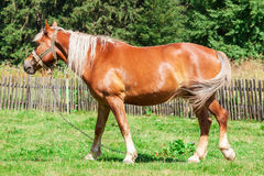 Horse in a Forest Glade. Extreme closeup Royalty Free Stock Photos