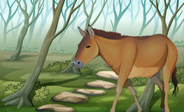 A horse at the forest. Illustration of a horse at the forest Royalty Free Stock Image