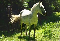 Horse in forest Royalty Free Stock Images