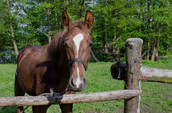 Horse in the forest paddock Royalty Free Stock Photo