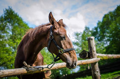 Horse in the forest paddock Stock Photography