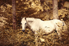Horse in the forest. Stock Photo