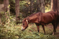 Horse in the forest. Royalty Free Stock Photo