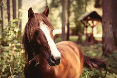 Horse in the forest. Royalty Free Stock Photography