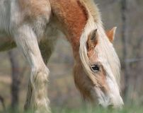 Horse. Found this beauty while driving Stock Photography