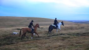 Horse and Fox hounds , Dartmoor, devon stock video