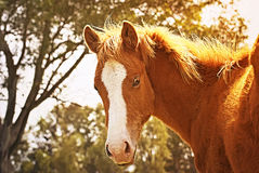 Horse free on a field in Argentina. In wintertime Royalty Free Stock Photos