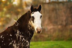 Horse free on a field in Argentina. In wintertime Royalty Free Stock Image