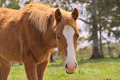 Horse free on a field in Argentina Royalty Free Stock Images