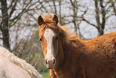 Horse free on a field in Argentina Stock Photography