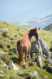 Horse free in the mountains Stock Photos