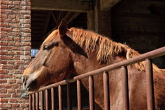Sleepy horse Stock Photos
