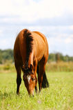 Horse on freedom Royalty Free Stock Photo