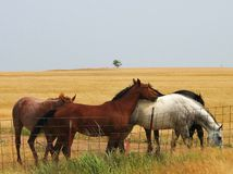 Horse Friends Royalty Free Stock Images