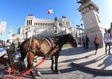 Horse in front of Altar of the Fatherland, Rome royalty free stock photo