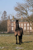 Horse in front of castle. A noble black horse in an aristocratic pose on a frozen paddock in front of an ancient manor Royalty Free Stock Photos