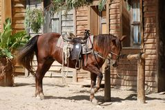 Horse in front of a house Royalty Free Stock Image