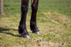 Horse front legs Royalty Free Stock Photography