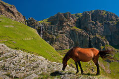 Horse in front of mountain waterfall Royalty Free Stock Photos