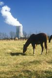 Horse in front of a nuclear power plant Stock Photos