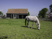 Horse in front of stable. Horse in meadow stock photos