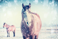 Horse on frosty winter day with snowfall Stock Photography