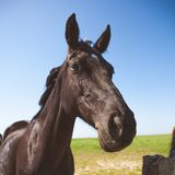 Horse funny eye and ears mouth portrait stock images