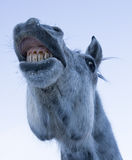 Horse funny face Royalty Free Stock Images
