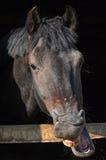 Horse Funny Face Royalty Free Stock Photo
