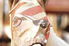 Horse in funny mask Royalty Free Stock Photography