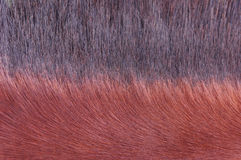 Horse fur Stock Photo