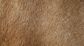 Horse Fur Royalty Free Stock Photos