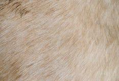 Horse fur. Detail of a horse fur Stock Photo