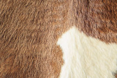 Horse fur Stock Photos