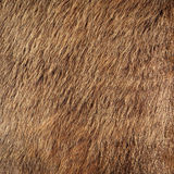 Horse fur Stock Images