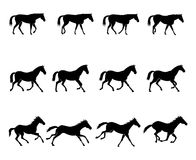 Horse gaits. Computer generated illustration: the three natural gaits of the horses. First row: WALK  Second row: TROT  Third row: GALLOP Stock Image