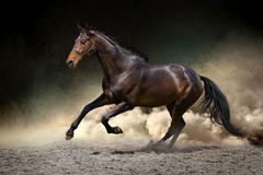 Horse gallop in desert. Black horse run gallop in dust desert Stock Images