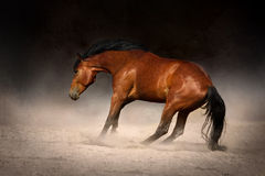 Horse gallop in desert Royalty Free Stock Photos