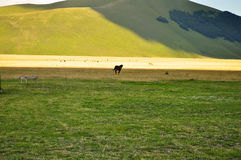 Horse gallop free on the Apennines landscapes Stock Photography