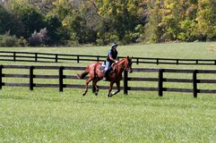 Free Horse Gallop In Middle Tennessee Stock Photos - 102230653
