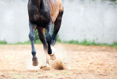 Horse gallop legs closeup Stock Photos