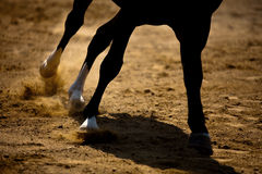 Horse galloping Royalty Free Stock Image