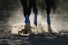 The horse is galloping along the sand. Raises the sand hoofs. Hooves. Dressage Stock Image