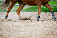 Horse galloping in paddock Stock Photography