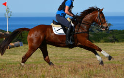 Horse galloping stock photo