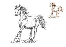 Horse galloping sketch portrait Stock Photos