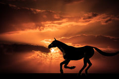 Horse galloping sunset. War Horse inspired, galloping mare at sunset stock images