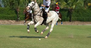 Horse In Games. Polo player and horse In Games Royalty Free Stock Images